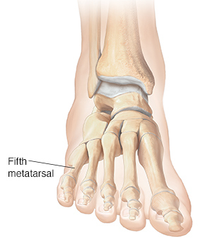 Front view of foot and ankle bones.